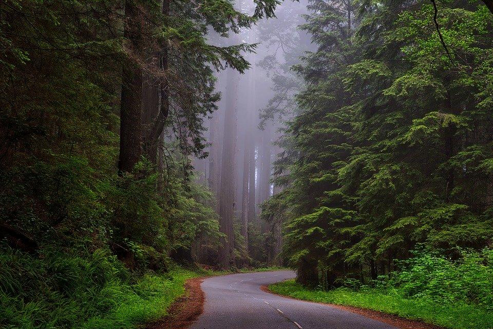 alam membuat bahagia menghilangkan stres
